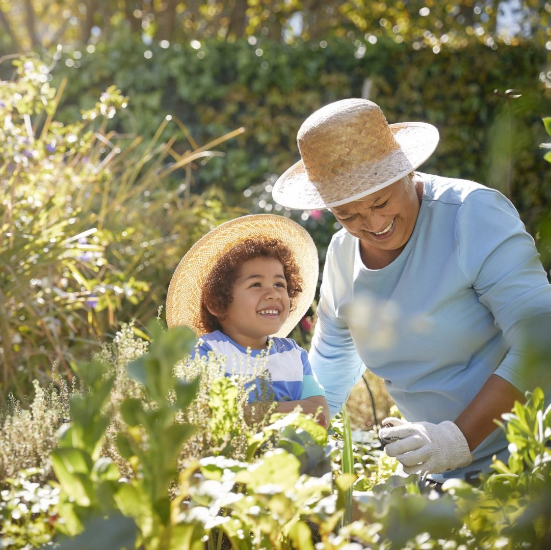 Grandmother and grandchild gardening in outdoor vegetable garden in spring or summer season. Cute little boy enjoys planting new flowers and vegetable plants. Both are wearing straw hats and blue shirts and both are smiling and happy. The garden is lush and beautiful.