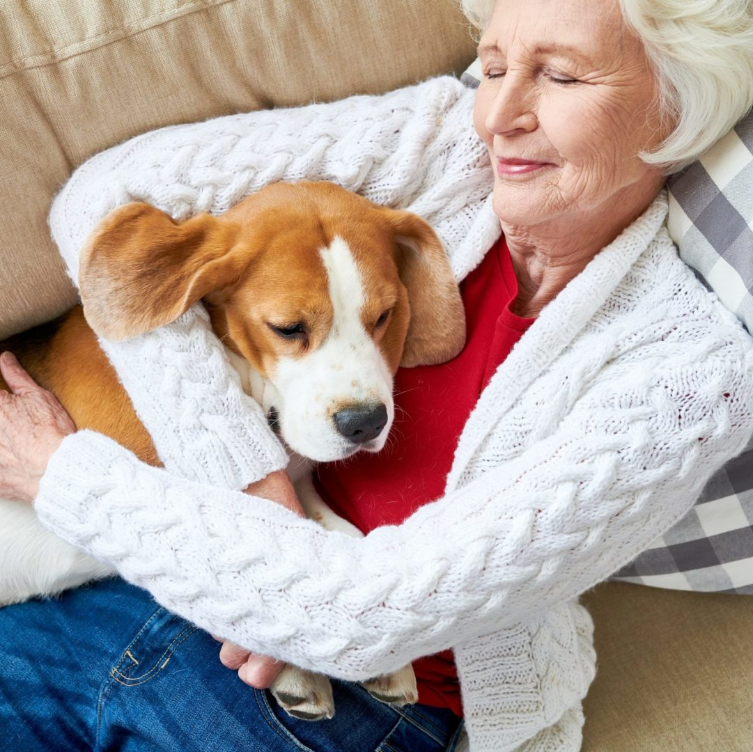 Caucasian older woman with bob length white hair in soft white cardigan, red shirt and denim pants, cuddling with a Beagle while sleeping on sofa. Sofa is tan and there is a black and white plaid pillow under her next and upper back.